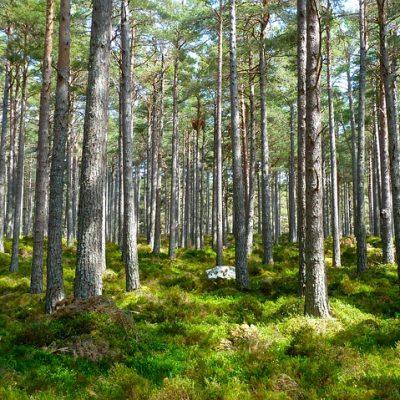 Cession des parts d'une forêt