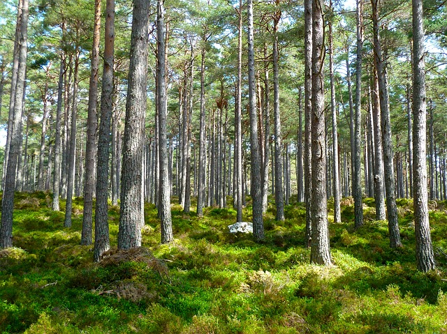 RJB actus - cession des parts d'une forêt